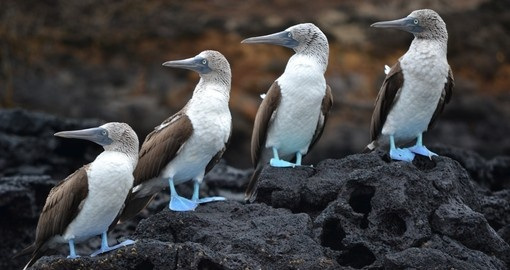 See Boobies and other wildlife on this Galapagos tour.