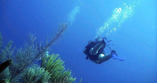 Include a dive on the reef during your trip to Belize