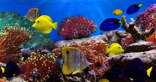 The warm waters of the Red Sea are home to a myriad of marine life