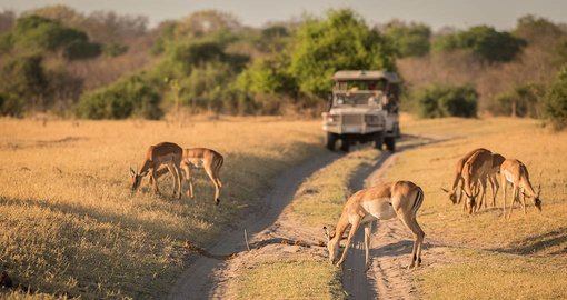 Get close and personal with wildlife on your Botswana Safari