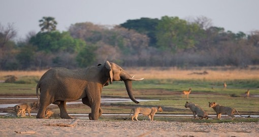 Explore wild life in South Luangwa National Park during your next Zambia vacations.