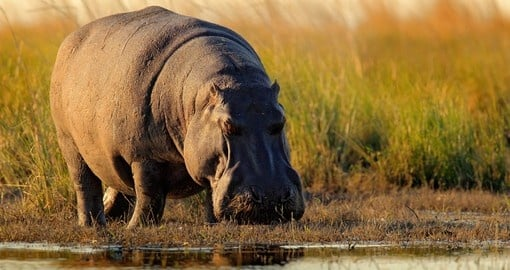 You will see lots of wildlife during your Botswana tours
