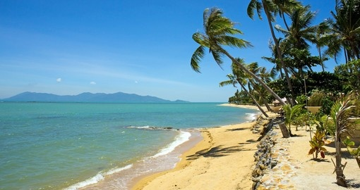 Tropical beach with coconut palm in Koh Samui