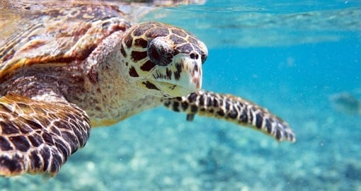 See wildlife in the ocean during your Seychelles vacation.