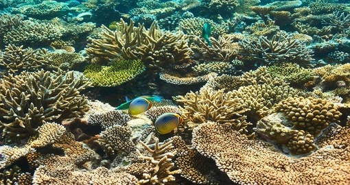 Snorkel along the coral reef in South Ari Atoll during your Maldives trip.