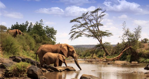While travelling to Kenya, experience the majestic African Elephants in their natural habitats