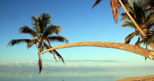Enjoy the palm trees on the beach during your next Fiji tours.