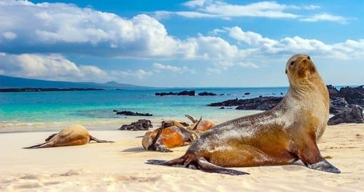 The Galapagos fur seal typically dives about 30 meters and spend about 70% of their lives on land