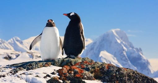 Enjoy the antics of penguins on your Antarctic Cruise