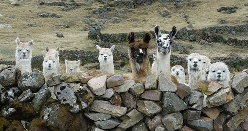 The locals you will meet in the Sacred Valley