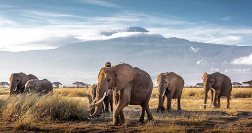 The second highest peak in Africa, Mount Kenya  is on the traditional Elephant migration route