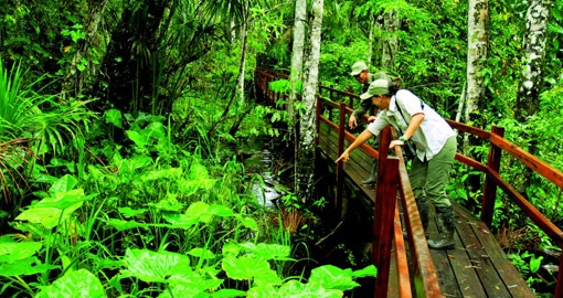 Take a jungle walks on your Peru vacation