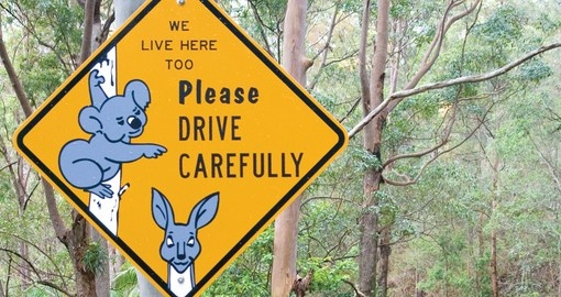 "Signs ""Keep an eye out for the locals"" will cheer you up during your Australia vacations."