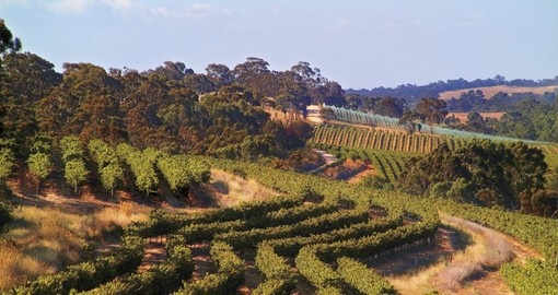 Clare Valley - SevenHill Cellars Vineyard