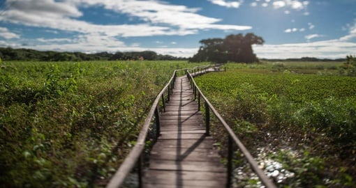 Experience the trekking the Pantanal during your next Brazil vacations.