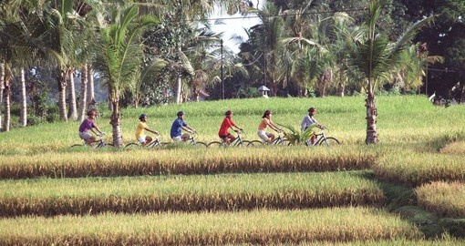 Biking through the rice fields of Asia