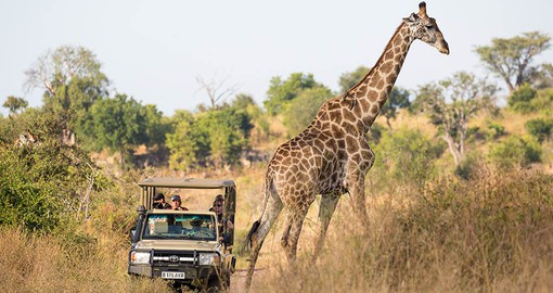 Enjoy a Game drive at Elephant Valley on your African safari
