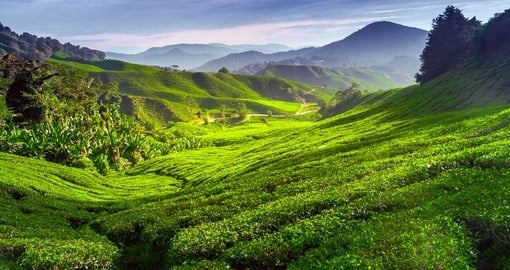 Get a understanding of the life of a tea plantation worker in the Cameron Highlands on one of your Malaysia Tours