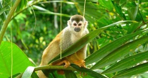 The unique wildlife is part of tour Costa Rica vacation package