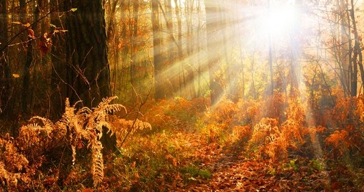 Beautiful sunset in autumn forest