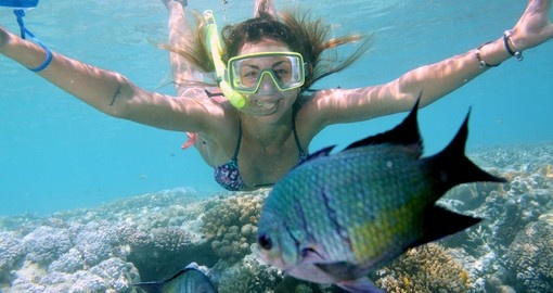 Swim with an array of marine life