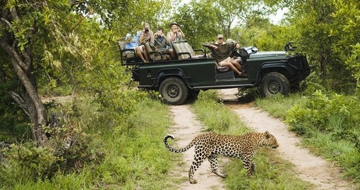 A leopard crossing road with tourists in jeep in background
