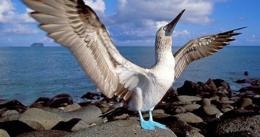 Learn about the unique bird life on your Galapagos Tours