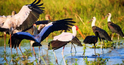 Go bird watching on your Malawai Safari