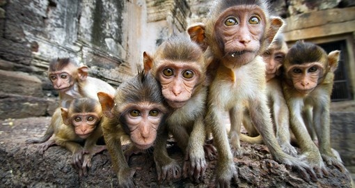 Baby monkeys in Thailand