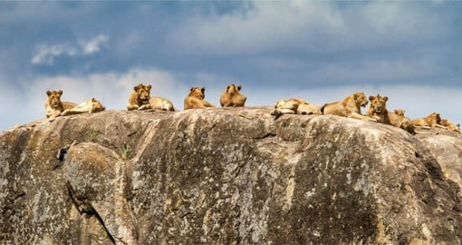 Serengeti is Tanzania's oldest national park and remains the flagship of the country's tourism industry