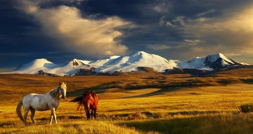 Grazing horses and snow capped mountains