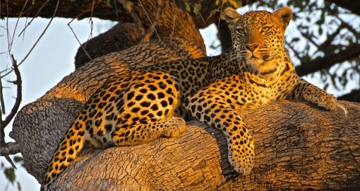 "Meet the members of the ""Big 5"" in Kruger National Park"