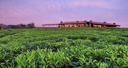 Your Rwanda Vacations stays at One&Only Nyungwe House