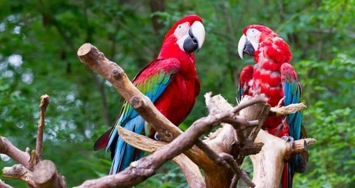 Pair of parrots sitting on the perch
