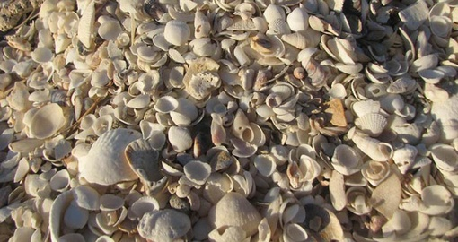 Visit beautiful Shell Beach on your Australia Vacation