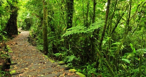 Walk the trails of the Monteverde Reserve during your Costa Rica vacation packages