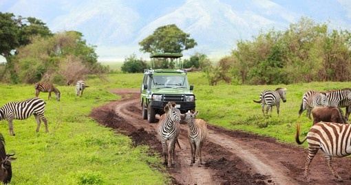 A Tanzania safari game drive in Ngorongoro Crater