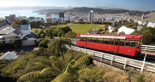 Explore Wellington on your New Zealand Tour