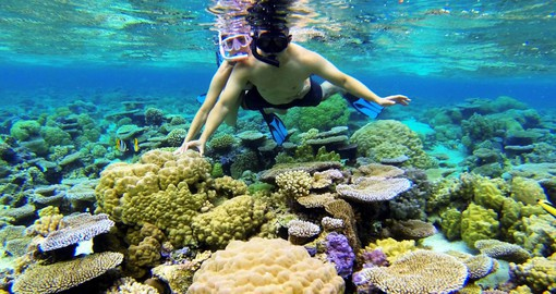 Snorkeling the Coral Gardens in Bora Bora can be part of your Tahiti Vacation Package