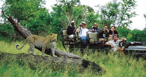 Enjoy many game drives