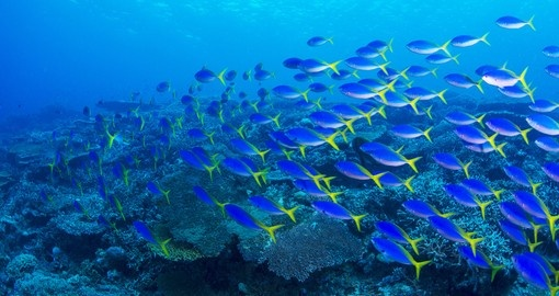 Discover Underwater view of the lagoon during your next Tahiti tours.