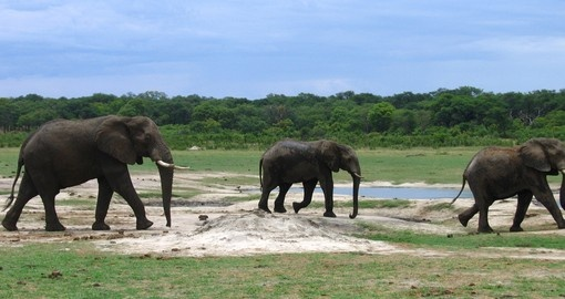 For non-golfers, a visit to Kruger National Park