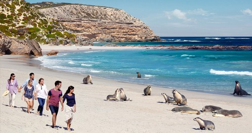 Seal Bay Conservation Park, Kangaroo Island, credit Paul Torcello