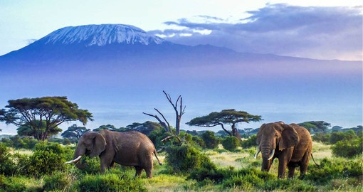 Crowned by Mount Kilimanjaro, Amboseli is renown for it's large herds of elephants