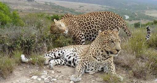 Shamwari's Big Cat Rescue and Education Centre