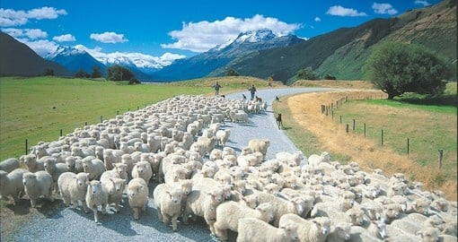 "Explore South Island ""Rush Hour"" during your next trip to New Zealand."