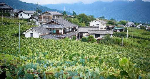 Try some Japanese wine on your Japan tour by Goway