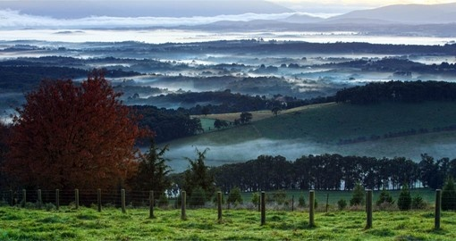 Enjoy a day in the Yarra Valley as part of your Australia Vacation