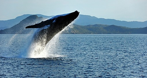 Experience whales on their migration routes during your trip to Australia