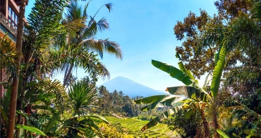 Visit the rice fields and see Mount Batukaru on your Bali Vacation